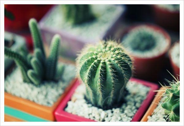 cactus para malas vibras