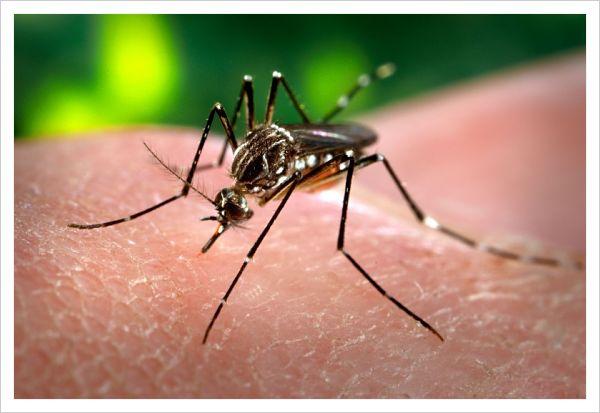 dengue en niños