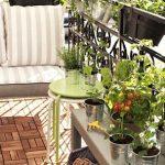 Plantas que debes tener en casa