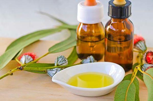 10 razones por las que tu hogar necesita aceite esencial de eucalipto