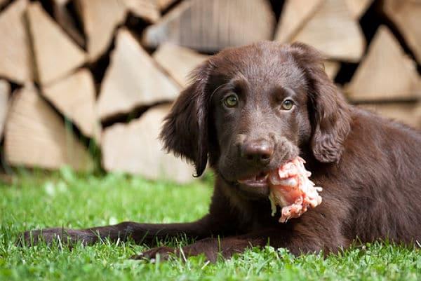 Alimentos tóxicos para perros ¡Evítalos a todo costa!